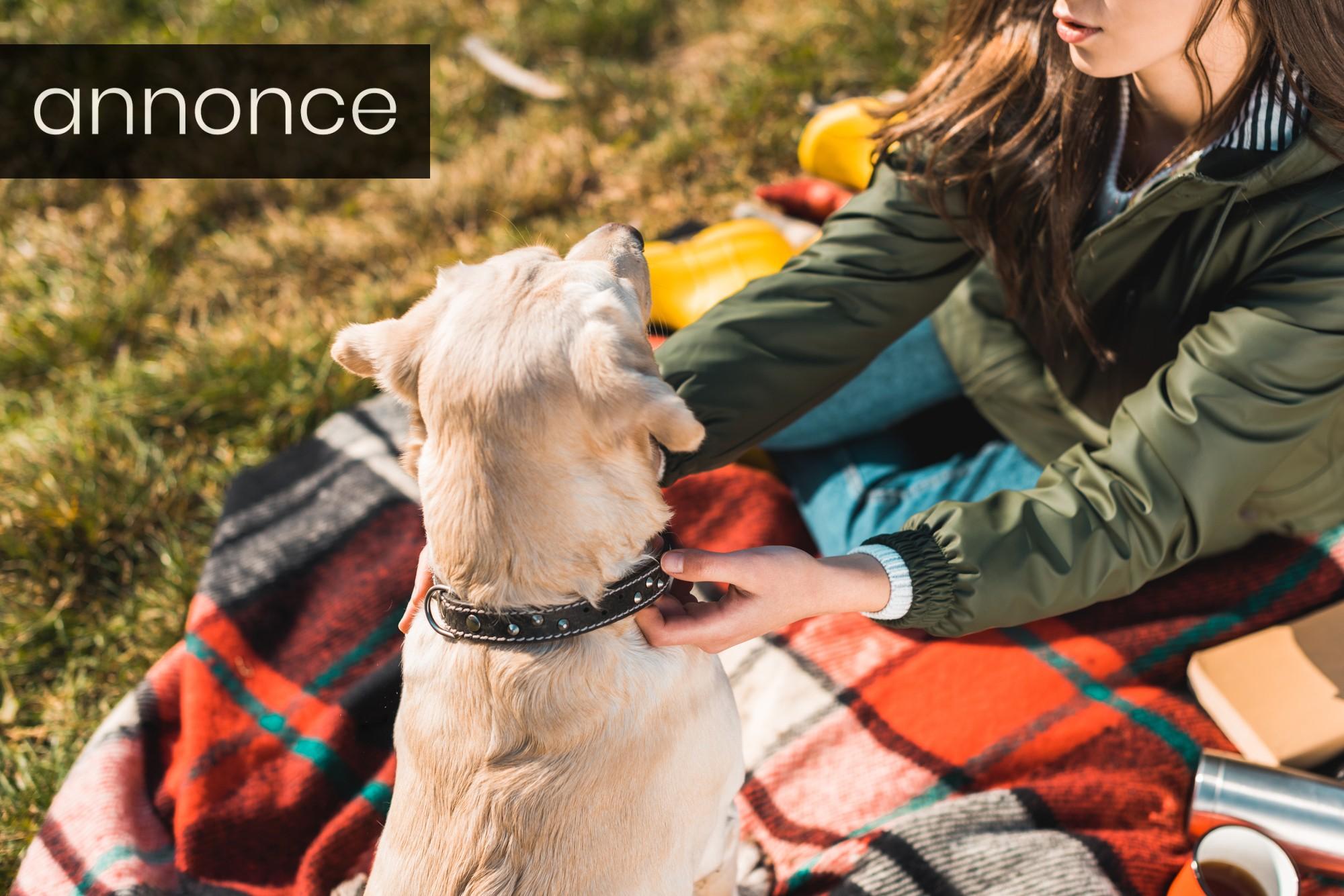 Hund med halsbånd